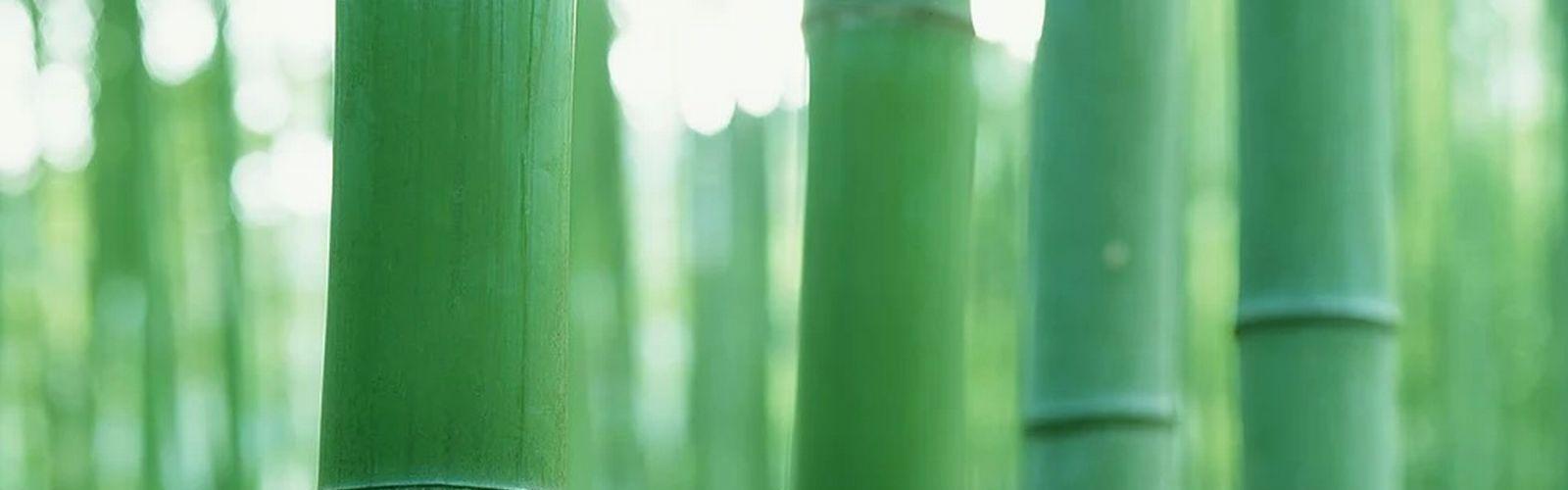 竹ヘッダーイメージ